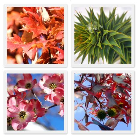 Add Long Lasting Interest And Beauty To Your Sierra Foothills Landscape! Sweetland  Garden Supply ...